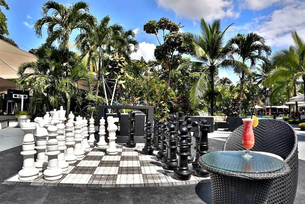 tree sky Resort arecales lined set
