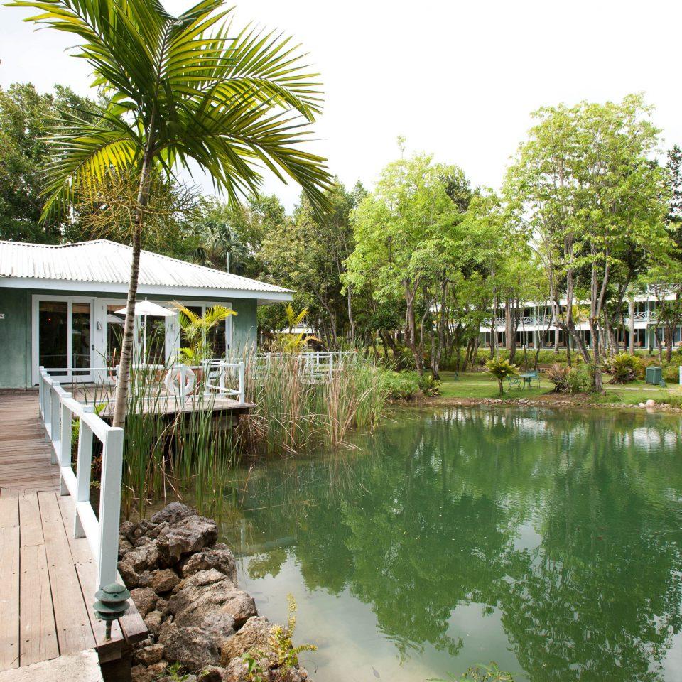 tree property house building swimming pool Resort waterway backyard