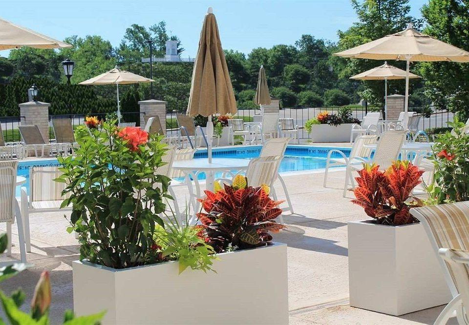 tree plant Resort floristry home backyard flower
