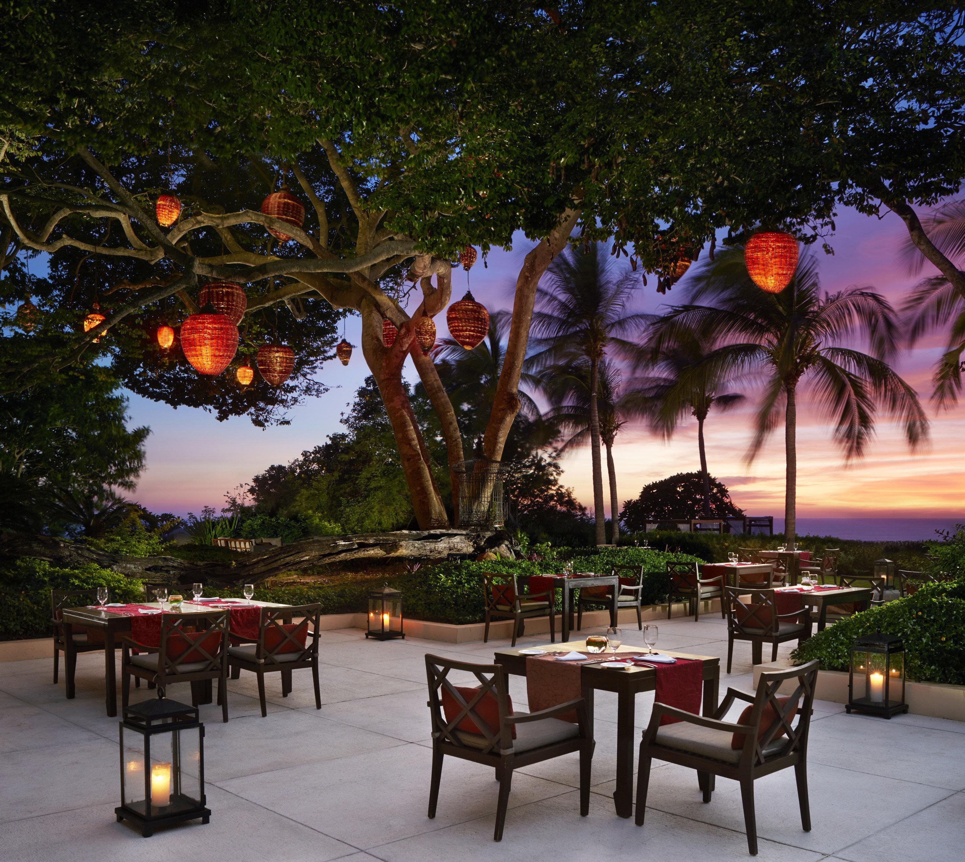 tree Resort restaurant lighting evening flower