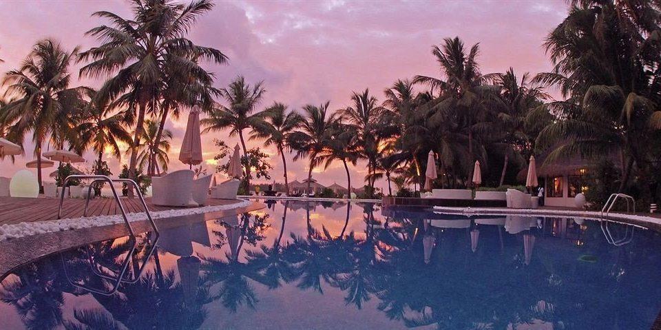 tree palm Resort evening plant swimming pool screenshot