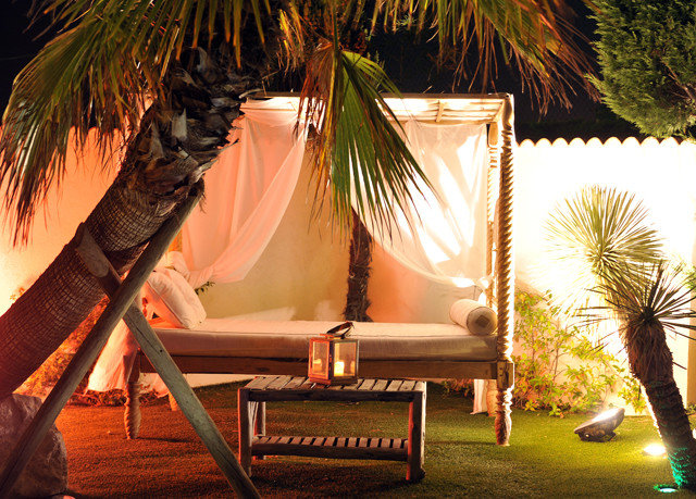 tree light plant lighting sunlight Resort flower palm