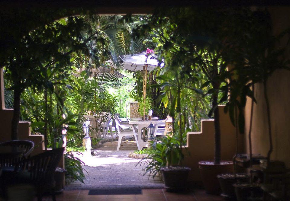 tree restaurant plant lighting flower Resort