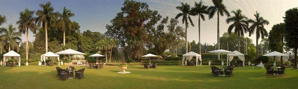 tree grass sky Resort lawn plant