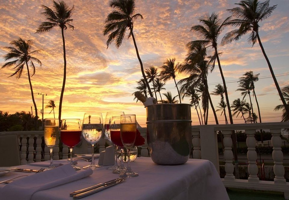tree palm Sunset evening arecales morning plant dusk palm family Resort shore