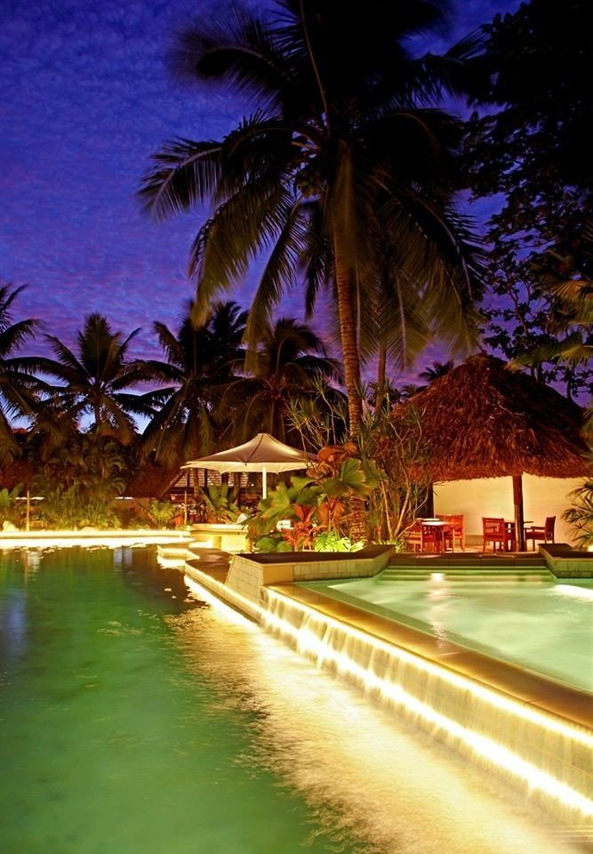 tree night light arecales evening lighting tropics dusk Resort palm family flower sunlight landscape lighting plant Sunset palm lined