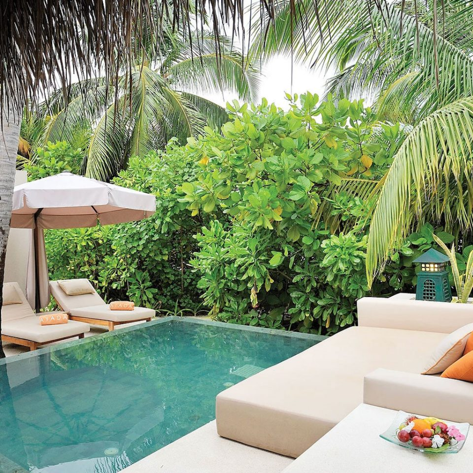 tree swimming pool property backyard Villa Resort arranged