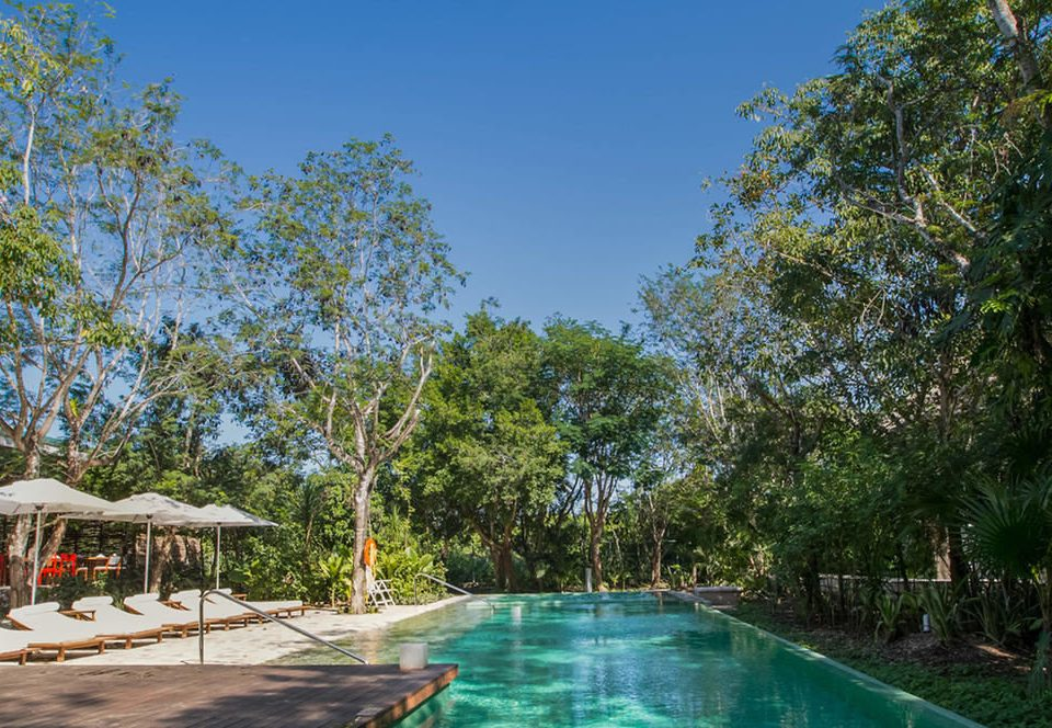 tree property swimming pool Resort backyard Villa