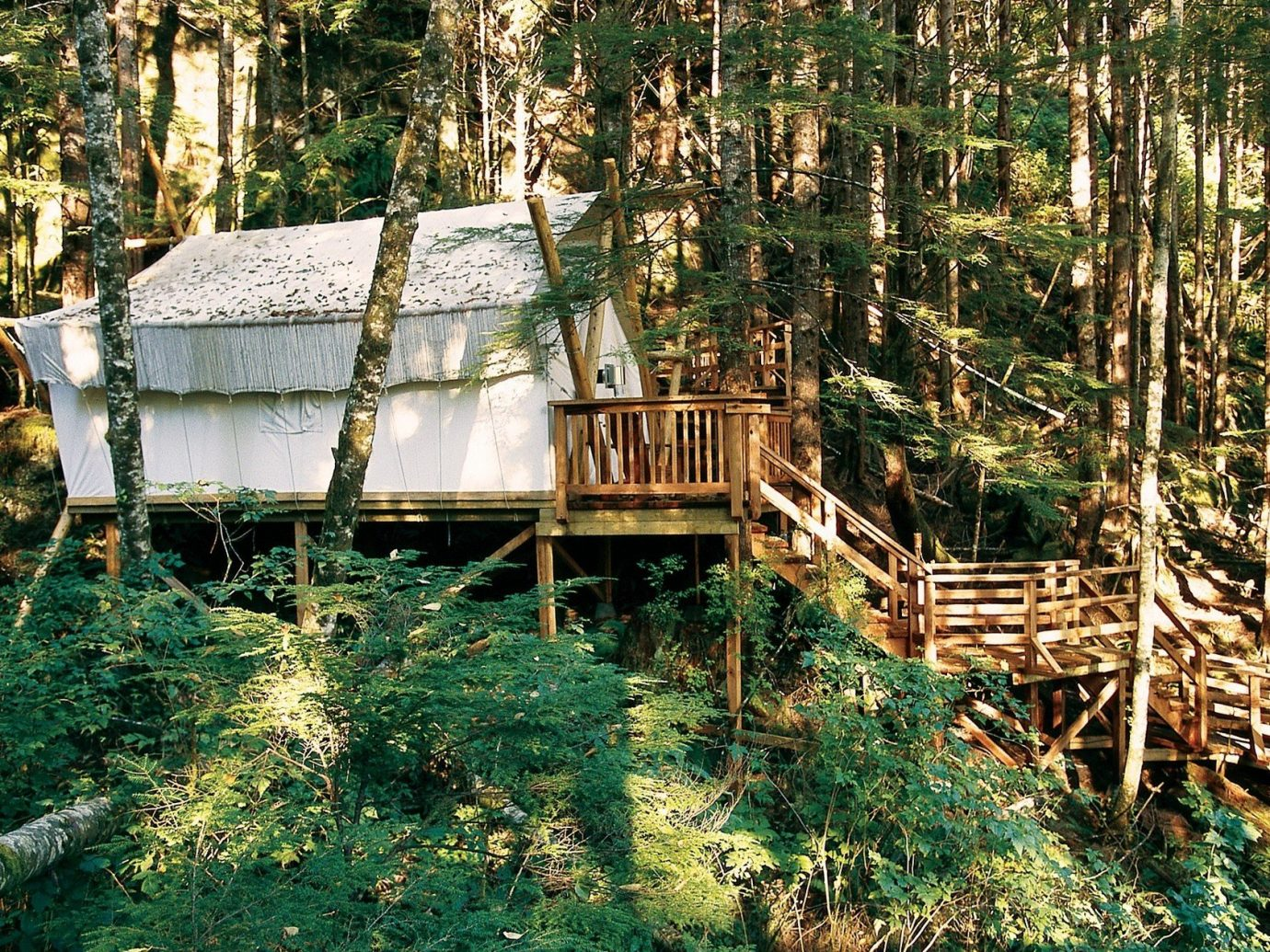 Glamping Hotels Outdoors + Adventure Weekend Getaways tree outdoor habitat grass wooden wilderness natural environment Forest ecosystem woodland wood Jungle rural area rainforest hut log cabin wooded surrounded