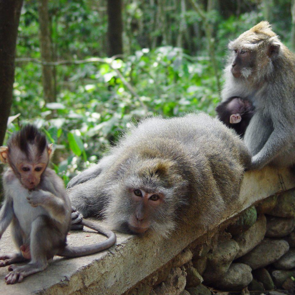 Safari Tropical Wildlife animal tree mammal primate macaque monkey old world monkey fauna zoo baboon