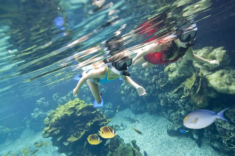 divemaster Sport water sport marine biology sports underwater swimming biology diving outdoor recreation snorkeling recreation Scuba Diving underwater diving ocean floor