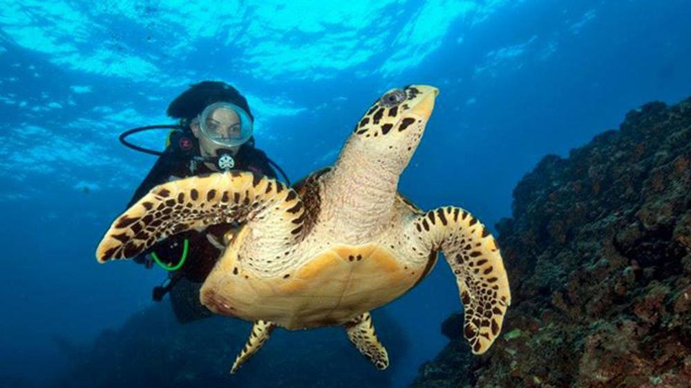 sky reptile marine biology turtle coral reef sea turtle biology underwater loggerhead reef Sea