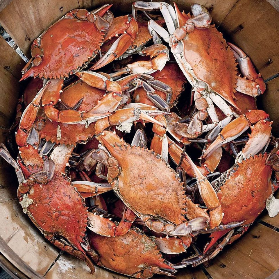 arthropod animal invertebrate food crab dungeness crab crustacean decapoda Seafood american lobster homarus animal source foods crab boil plant king crab fish lobster soft shell crab shrimp shellfish pan meat dirty cooked sliced