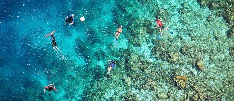 Sport marine biology underwater water sport reef biology diving coral reef sports underwater diving swimming colorful ocean floor