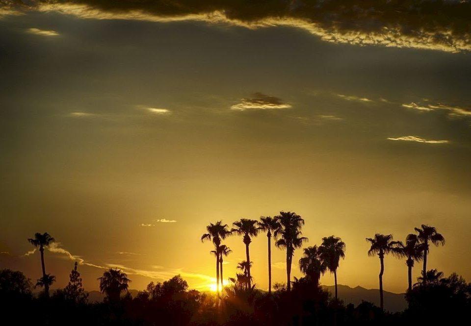 sky Sunset Sun cloud horizon atmospheric phenomenon sunrise tree dawn light atmosphere afterglow dusk morning evening sunlight plant setting field savanna palm clouds