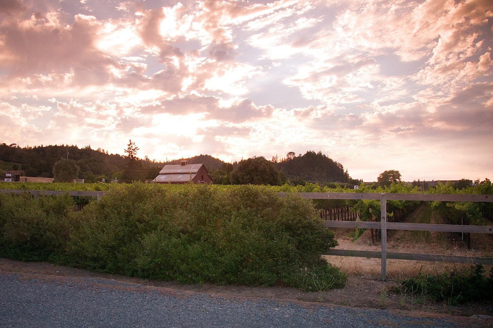 grass sky tree cloud morning Sunset rural area field hill landscape evening sunlight dusk