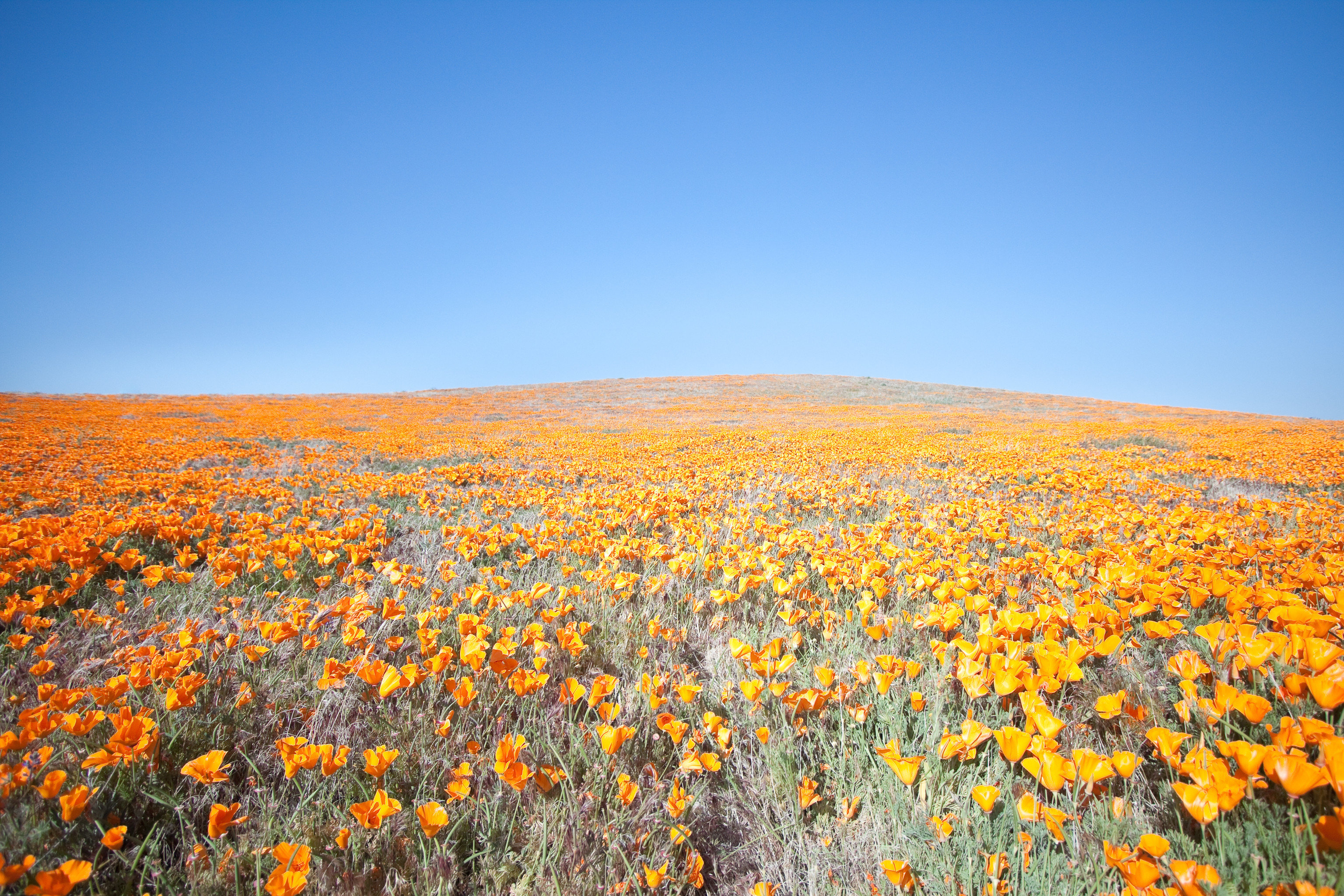 Trip Ideas sky flower plant outdoor horizon field grassland ecosystem plain prairie steppe land plant morning hill poppy wildflower grass family flowering plant meadow landscape Sunset tundra sunflower plateau sunlight autumn sunrise colorful brittlebush