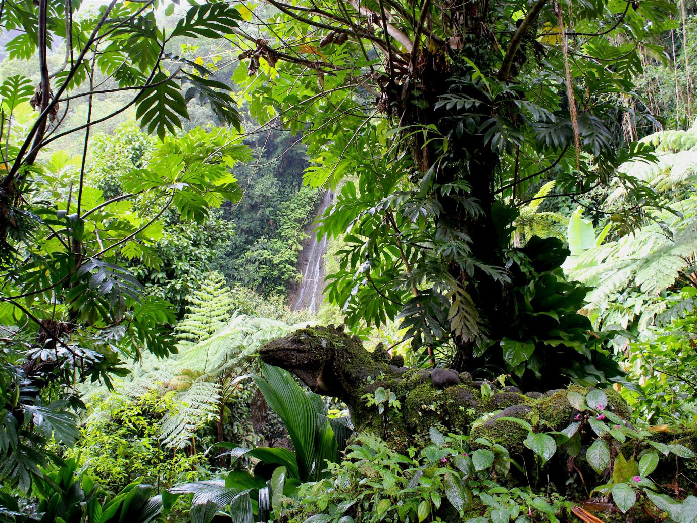 Trip Ideas tree outdoor habitat vegetation Nature rainforest plant natural environment Forest green woodland flora wilderness old growth forest ecosystem botany Jungle leaf branch Garden flower tropics stream sunlight biome water feature lined lush