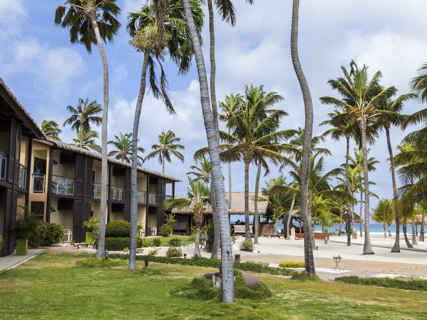Aruba caribbean Hotels tree grass outdoor sky palm property Resort plant vacation Beach estate arecales palm family woody plant walkway Village lawn