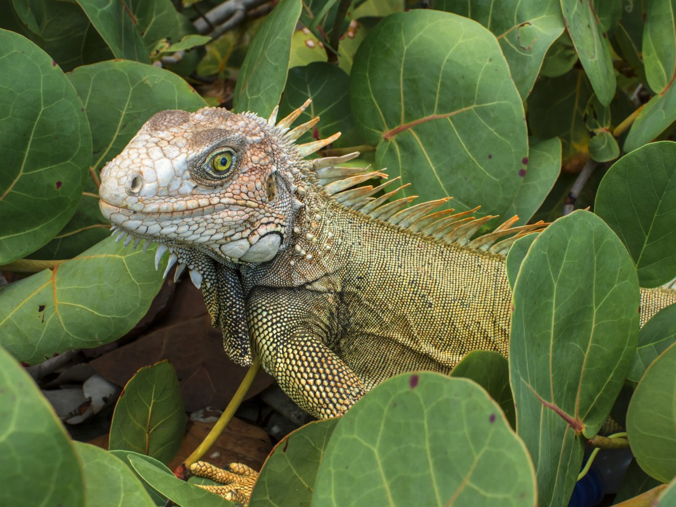 Beach Trip Ideas reptile plant animal outdoor lizard iguana vertebrate green iguania scaled reptile leaf fauna Wildlife chameleon botany african chameleon Jungle tropics tortoise rainforest emydidae Garden surrounded