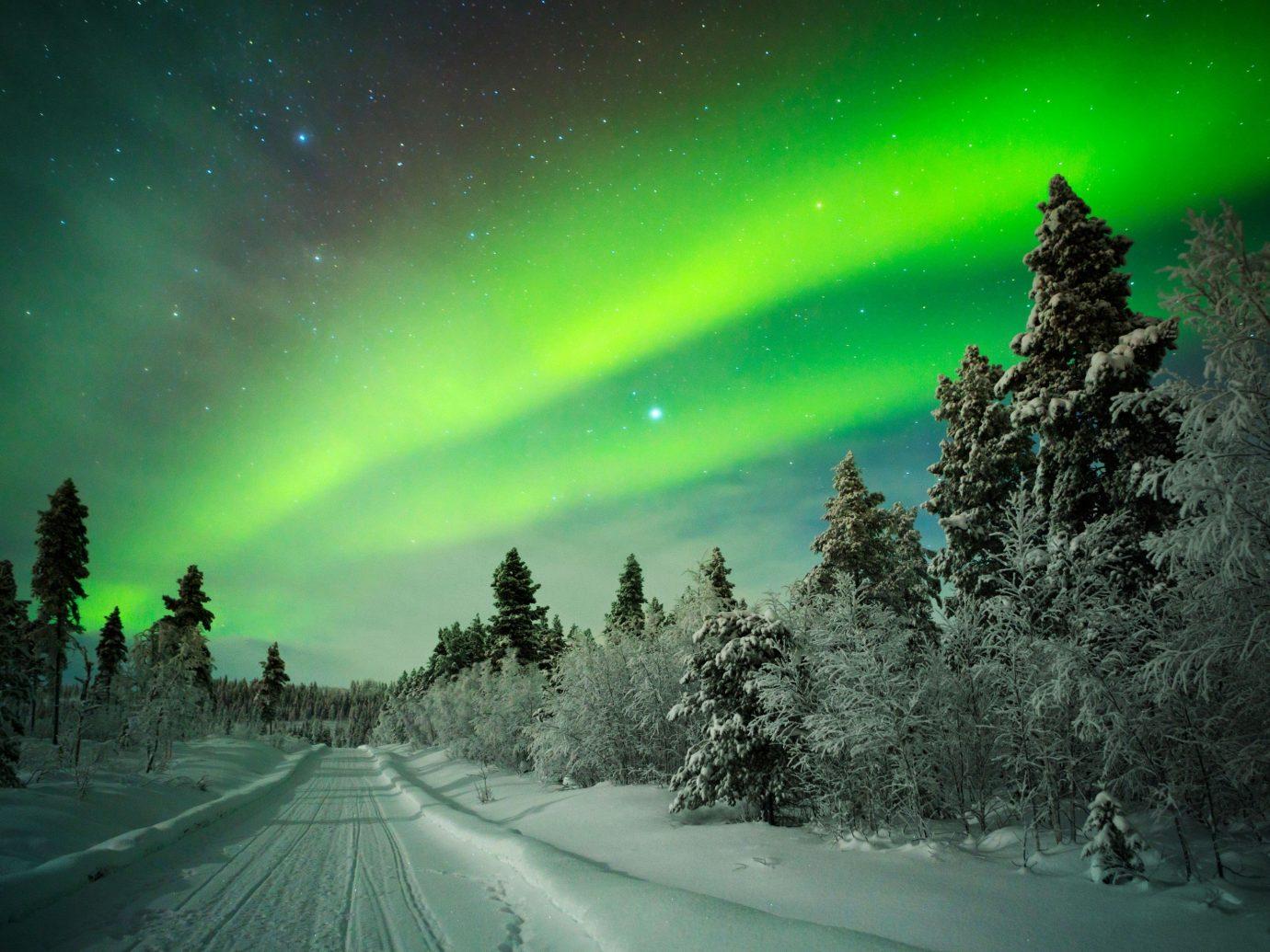 Trip Ideas tree outdoor aurora weather night atmosphere Nature midnight bright Night Sky