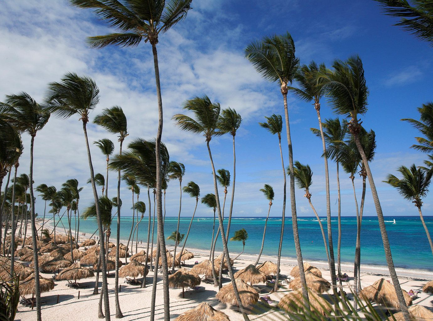 All-inclusive Beach Beachfront Family Hotels Luxury Resort Romantic Scenic views Waterfront outdoor tree sky palm water palm family caribbean vacation Ocean plant Sea shore lined arecales Coast woody plant tropics lawn Lagoon bay sandy cape flowering plant shade several line