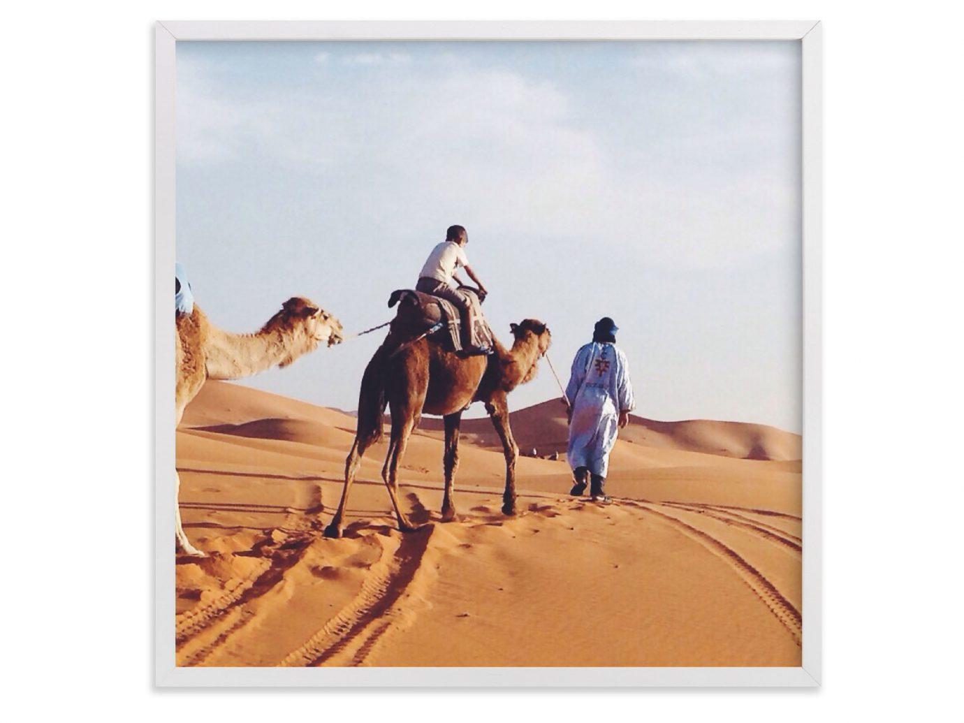 Style + Design Camel mustang horse landscape Desert sahara camel like mammal aeolian landform illustration