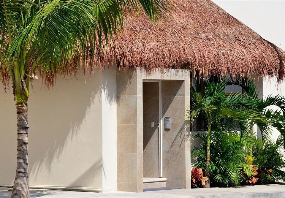 tree palm property house home plant arecales Villa