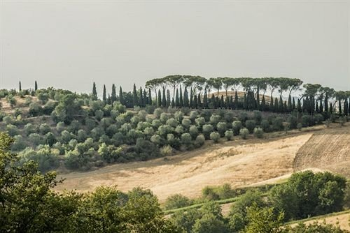 tree agriculture field mountain soil hill plantation Vineyard panorama terrain traveling hillside day