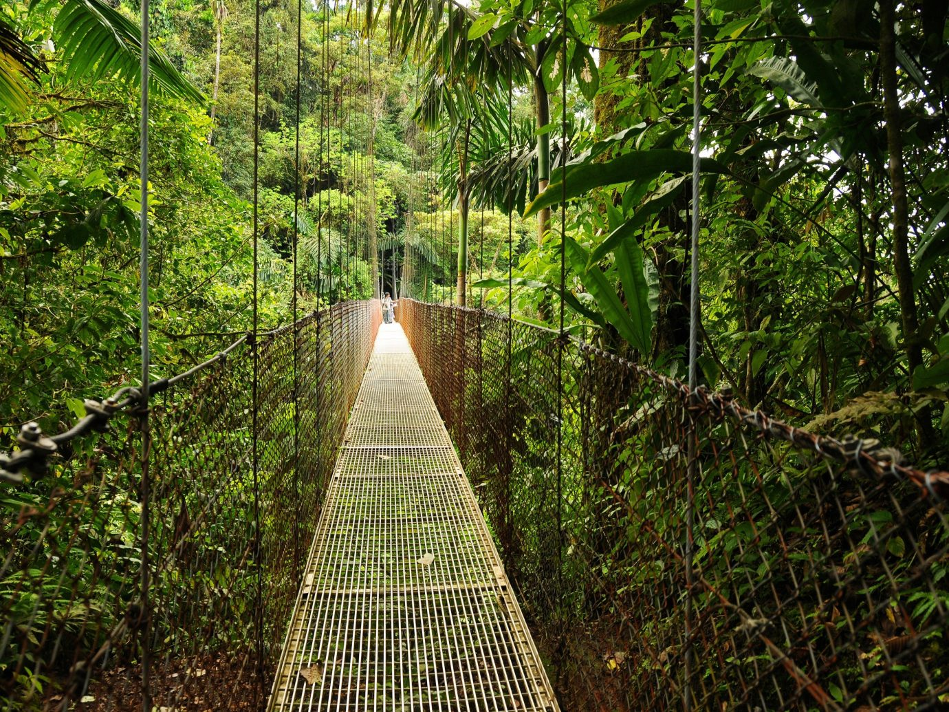 Trip Ideas tree bridge building habitat outdoor Nature vegetation natural environment green rainforest Forest botany Jungle woodland sunlight leaf Garden canopy walkway botanical garden plant wood wooded