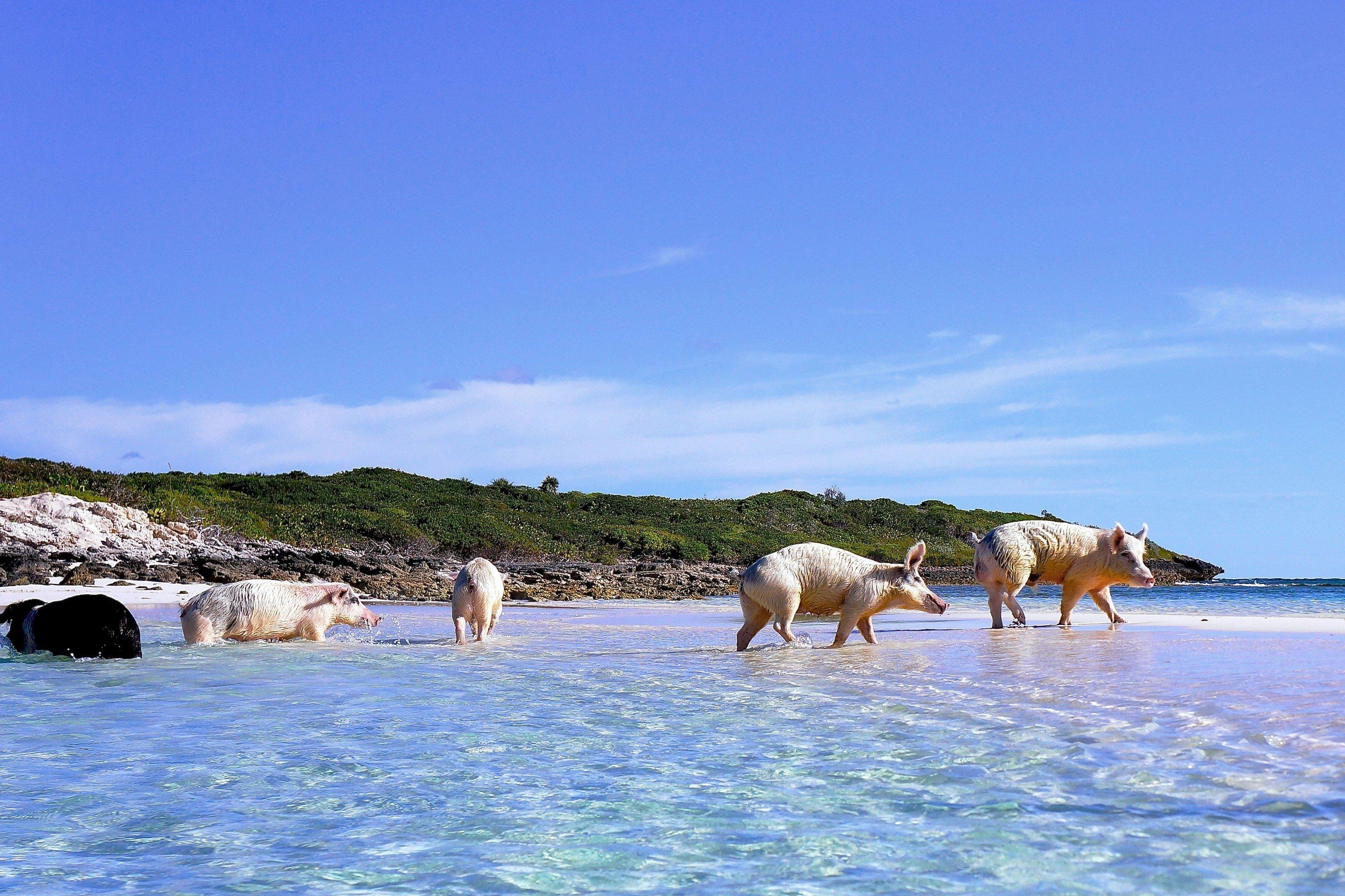 Hotels Offbeat sky outdoor water Beach Sea vacation Ocean Coast shore mammal Island
