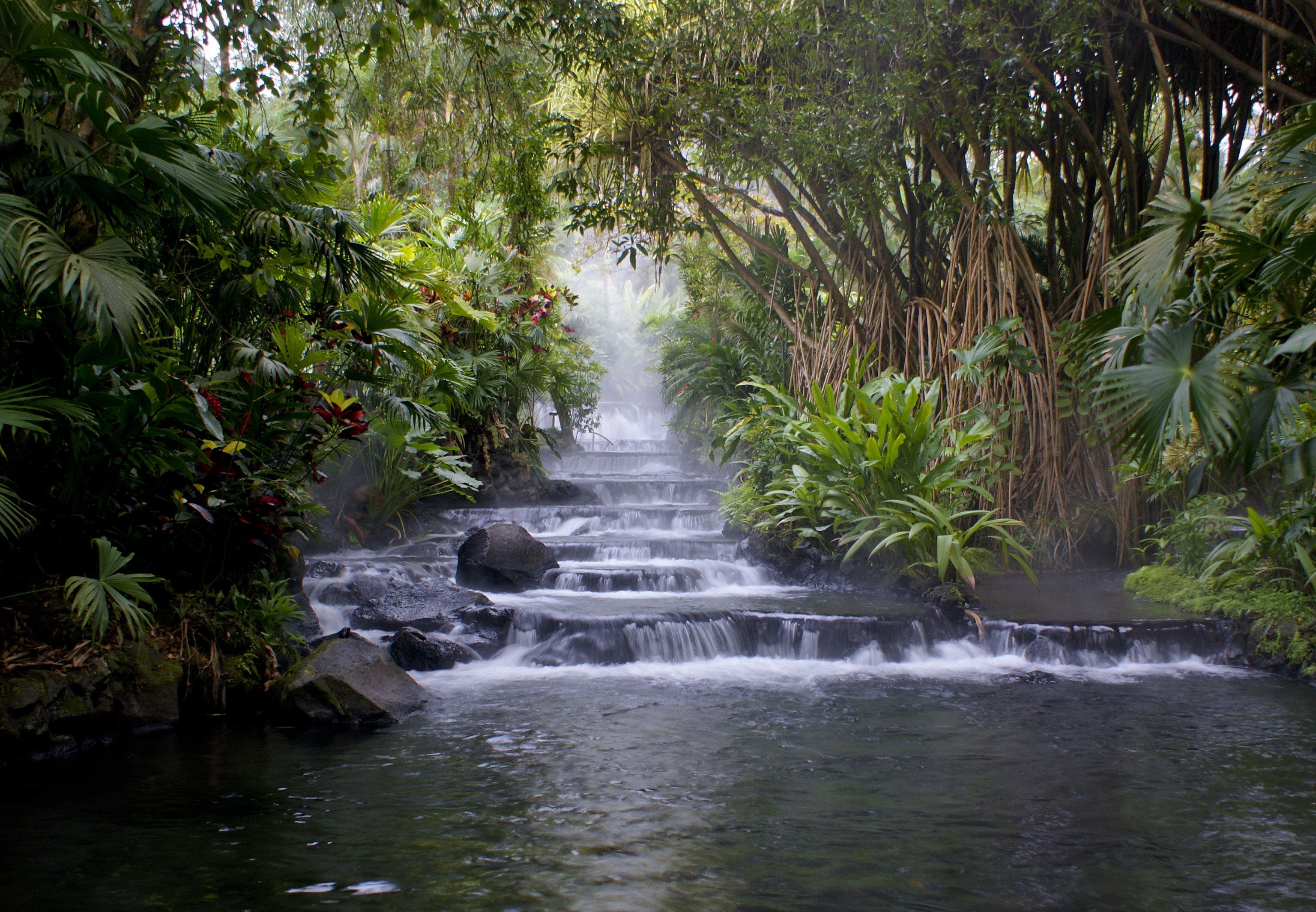 Outdoors + Adventure Trip Ideas tree outdoor water Nature vegetation water resources body of water nature reserve watercourse rainforest Waterfall arecales water feature stream creek Jungle River botanical garden palm tree tropics riparian zone old growth forest landscape Forest plant arroyo pond bank tributary state park