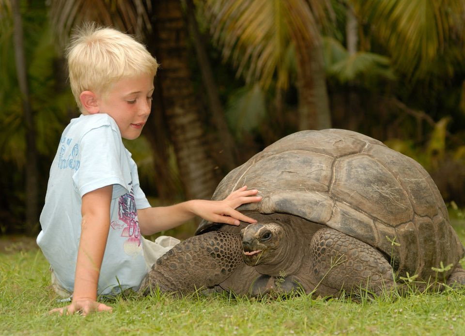 reptile grass turtle animal boy young little child tortoise fauna Wildlife zoo baby
