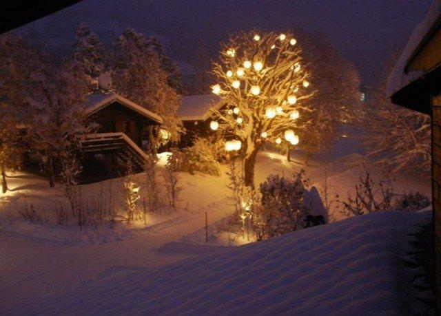 snow tree Winter night weather season evening sunlight
