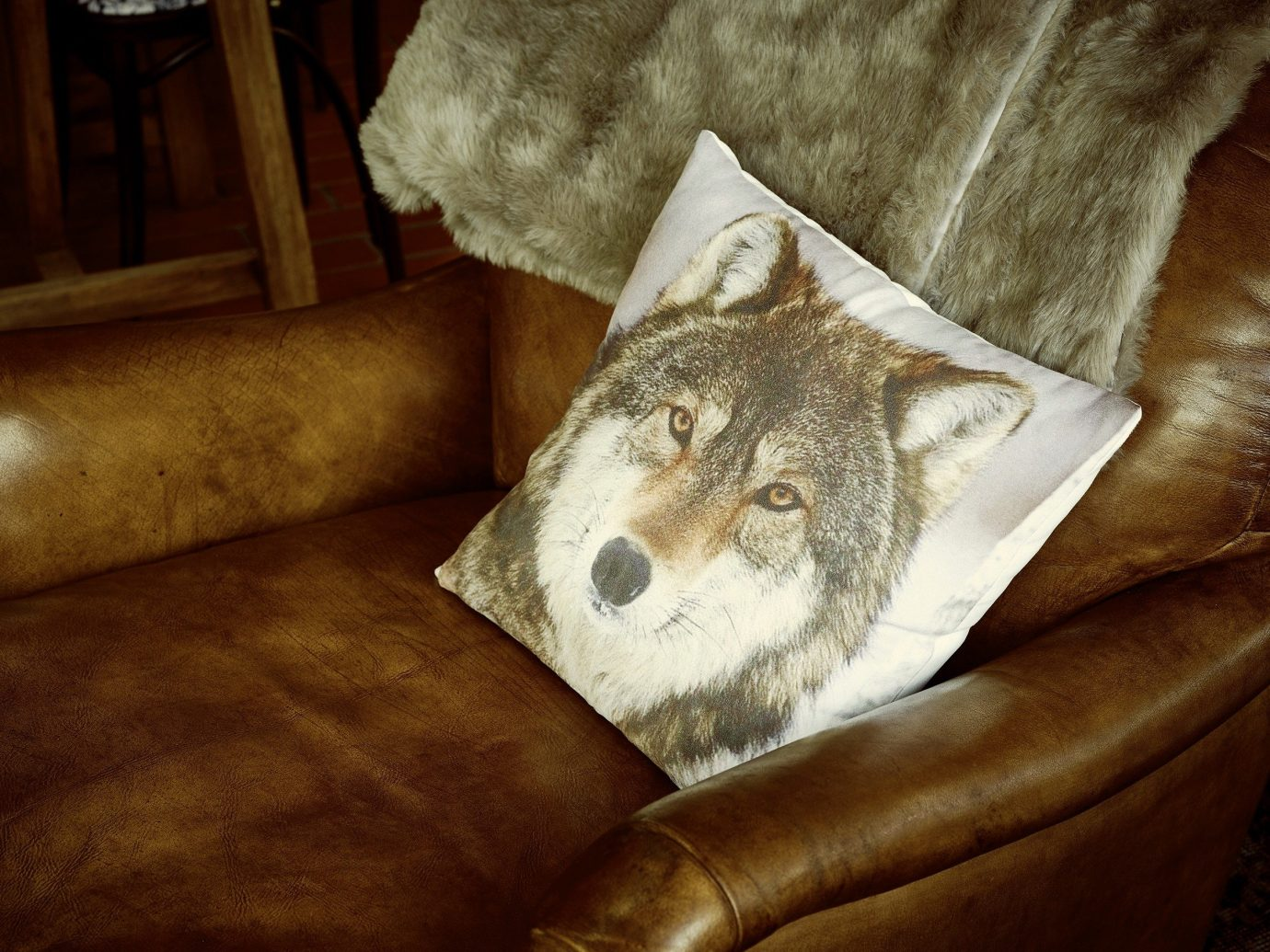Trip Ideas sofa indoor cat mammal image painting dog like mammal leather