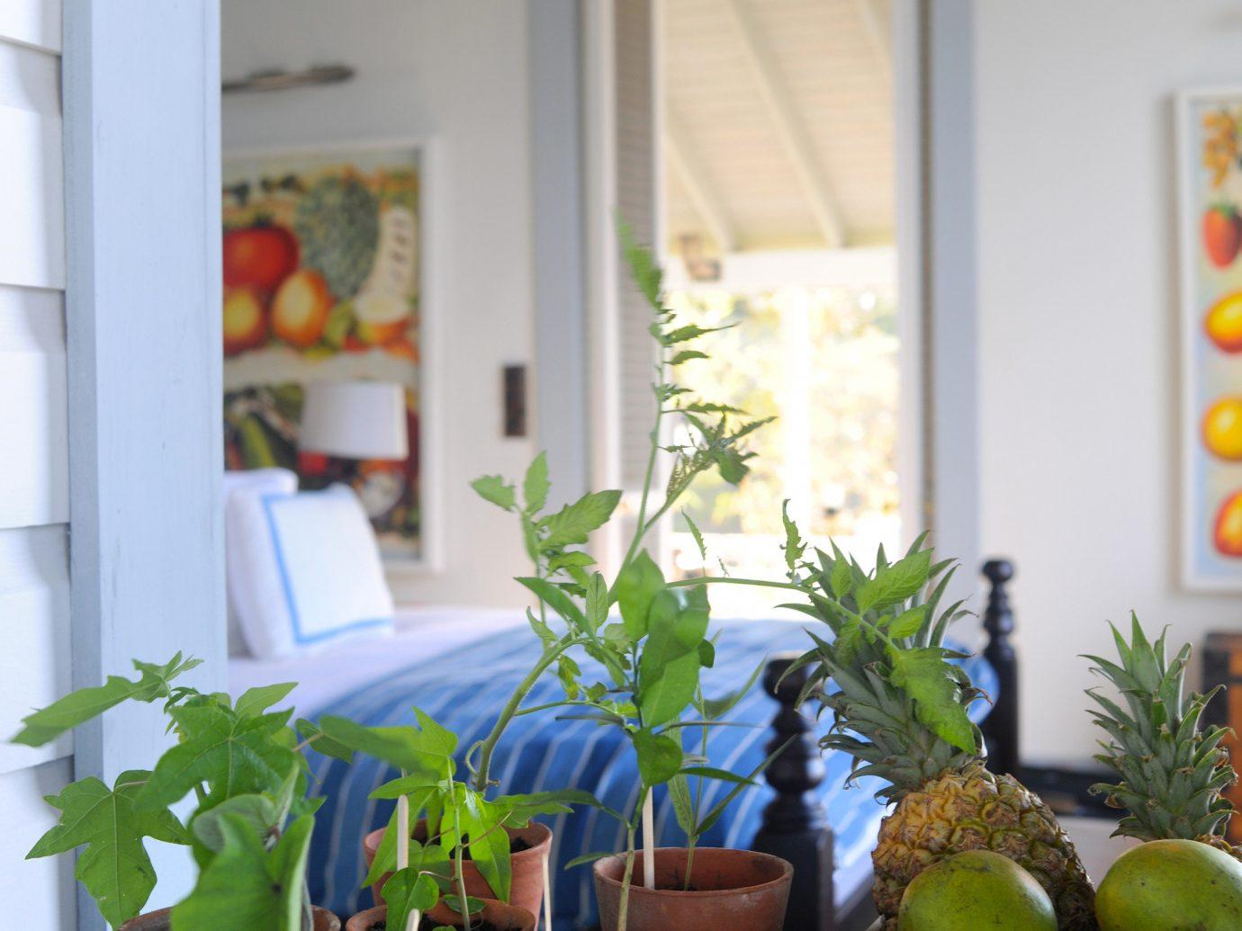 Trip Ideas room indoor floristry Balcony home flower window interior design plant cottage produce
