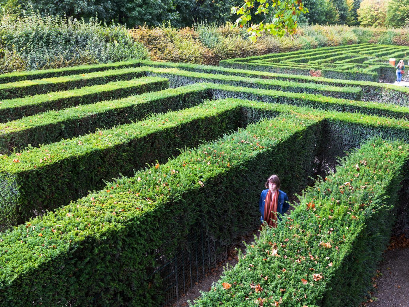 Trip Ideas grass outdoor agriculture botany field Garden plantation lawn green shrub flower soil hedge tea annual plant plant surrounded lush