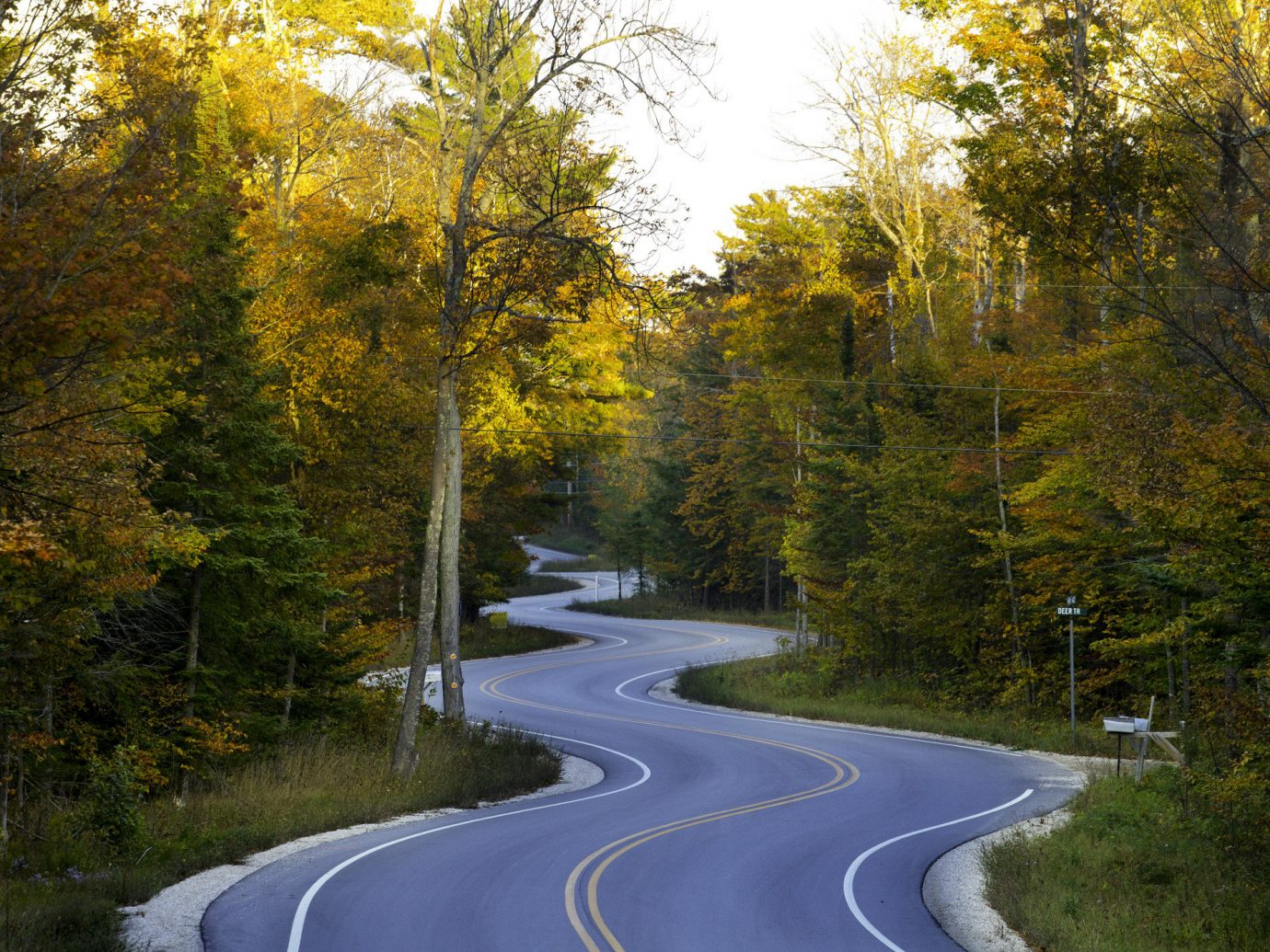 Road Trips Trip Ideas Weekend Getaways tree grass outdoor road leaf Nature yellow autumn woody plant infrastructure water plant Forest path scene way sky biome landscape reflection asphalt temperate broadleaf and mixed forest wooded woodland surrounded traveling