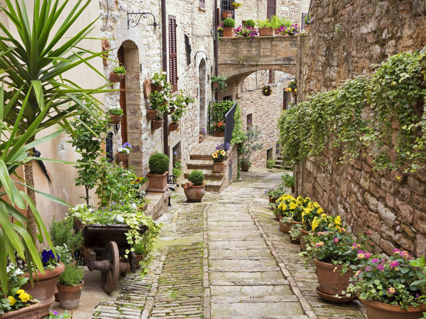 Trip Ideas plant outdoor Garden flora botany Courtyard wall flower stone Village estate yard way sidewalk surrounded