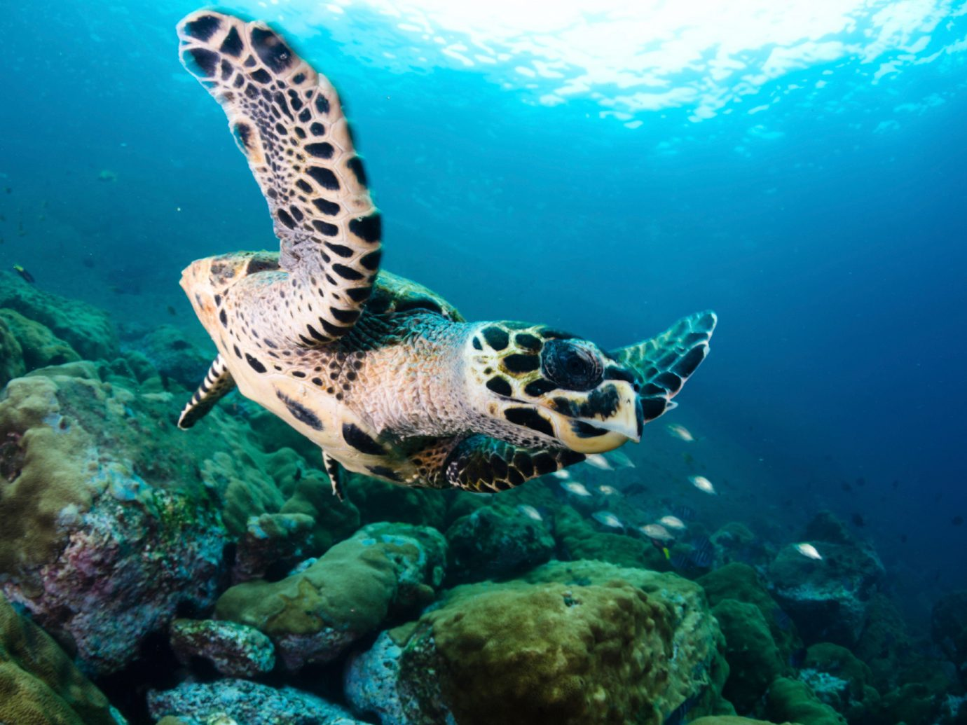 Trip Ideas reptile turtle marine biology underwater reef coral reef sea turtle biology Sea rock Ocean loggerhead diving fish coral reef fish water sport ocean floor