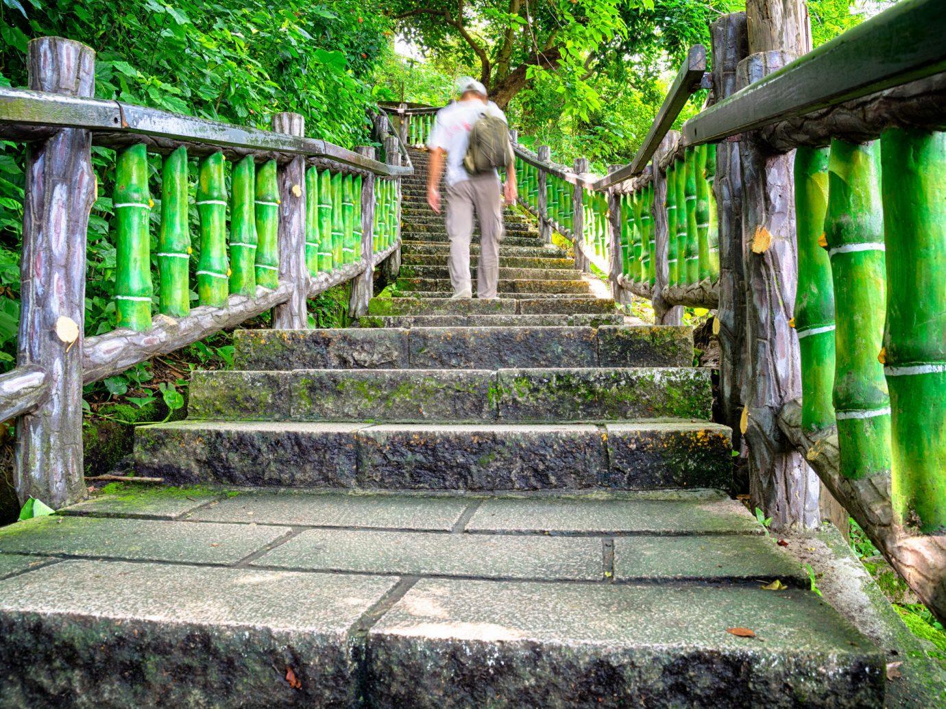 Trip Ideas outdoor green standing walkway Garden bridge Jungle park