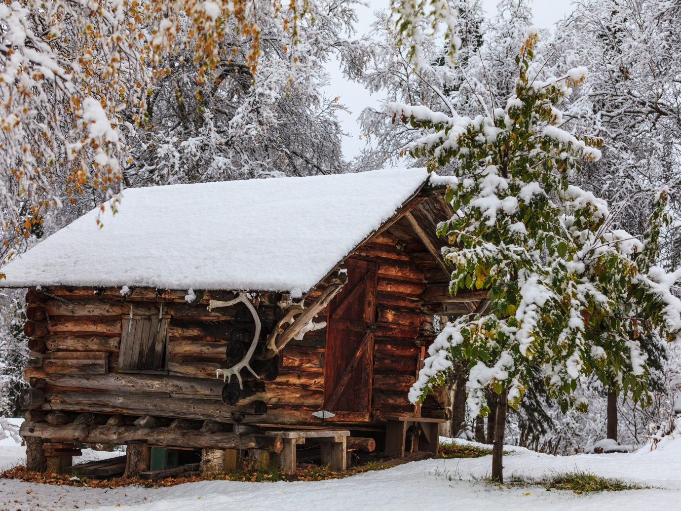 Trip Ideas tree snow outdoor Winter weather building house season hut log cabin sugar house rural area shack wooden wood surrounded
