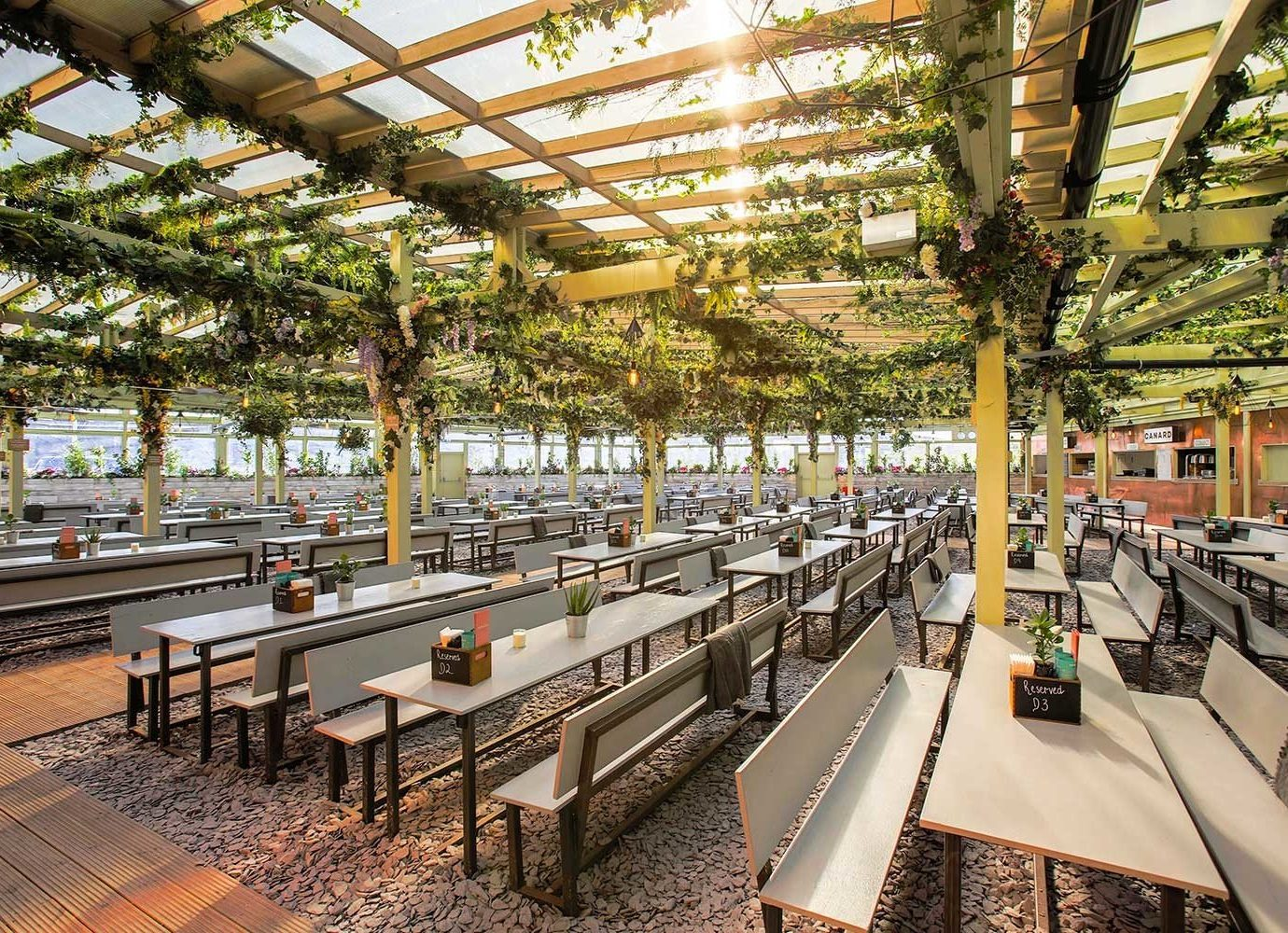 tree plant Pergola on the roof social hangout people summer
