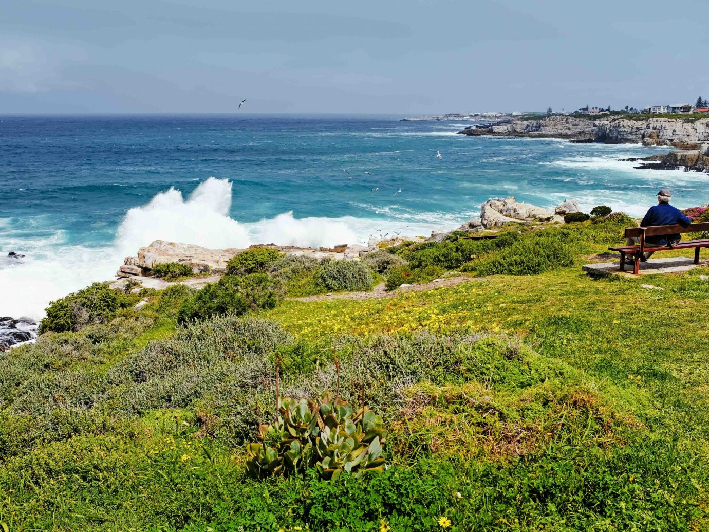 Hermanus Coast Sea shore promontory Beach Ocean sky coastal and oceanic landforms cape terrain bay headland tourism grass wave tropics landscape