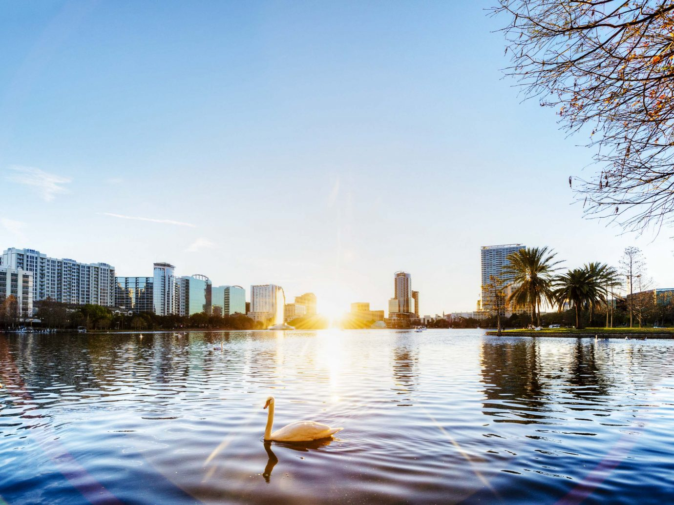 Orlando view on Lake Eola