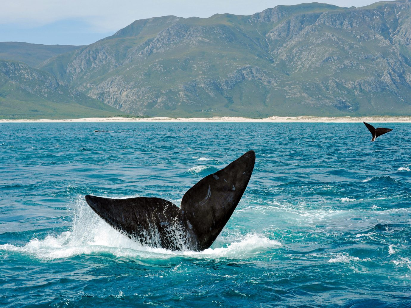 Hermanus mammal water marine mammal whales dolphins and porpoises whale Sea Ocean Wildlife wind wave wave coastal and oceanic landforms humpback whale sky