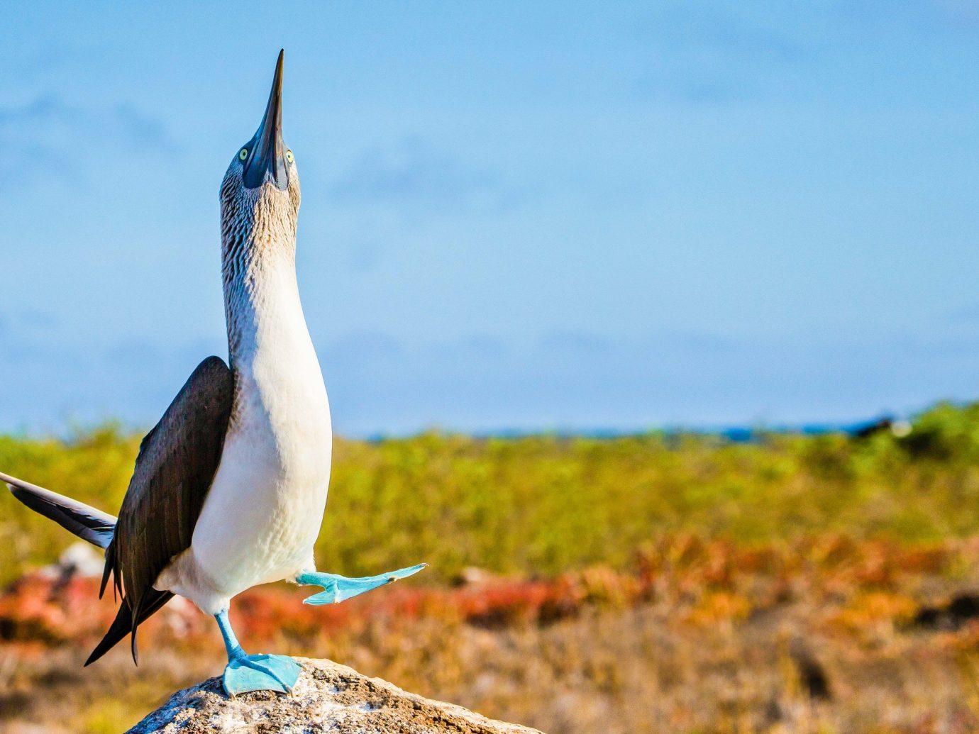 sky Bird ecosystem fauna beak Wildlife seabird ecoregion