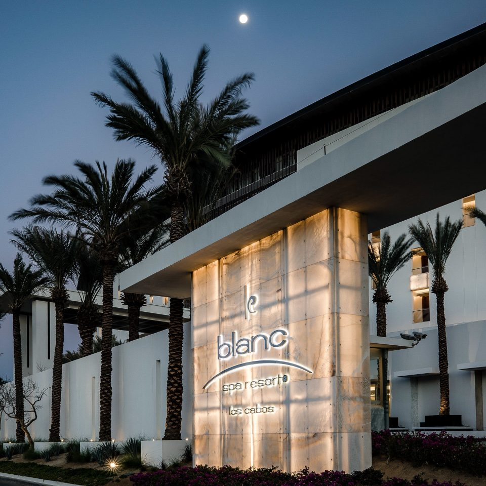 building palm tree Architecture arecales sky tree condominium mixed use house corporate headquarters night