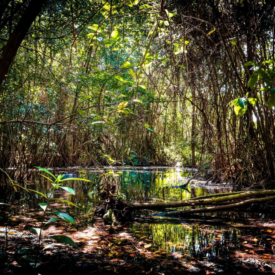 tree water Nature vegetation nature reserve Forest pond rainforest Jungle woodland leaf old growth forest stream creek watercourse plant swamp riparian forest riparian zone bayou wetland bank River landscape sunlight valdivian temperate rain forest branch water feature arecales state park surrounded wooded