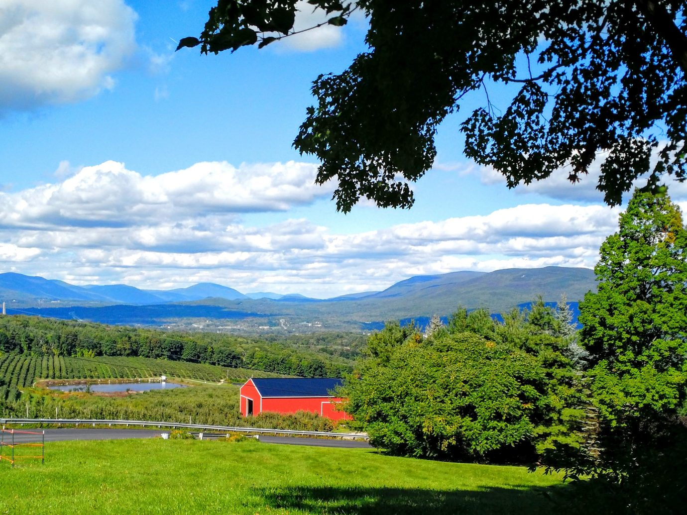 Scene of an apple orchard in Vermont